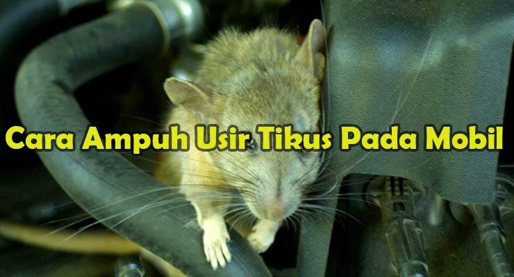 Cara Ampuh Usir Tikus Pada Mobil